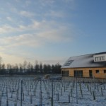 West Street Vineyard in Winter